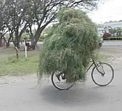 grass bicycle