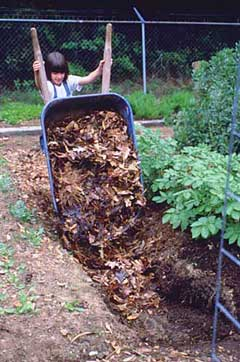 trench compost